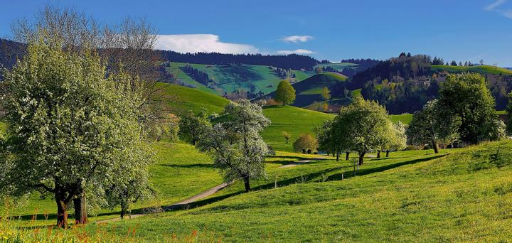Fruit trees on grass-covered hills
