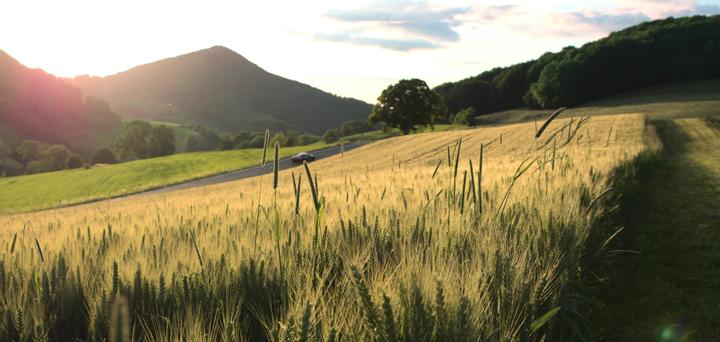 A wheat field with mountains and the sunset in the background